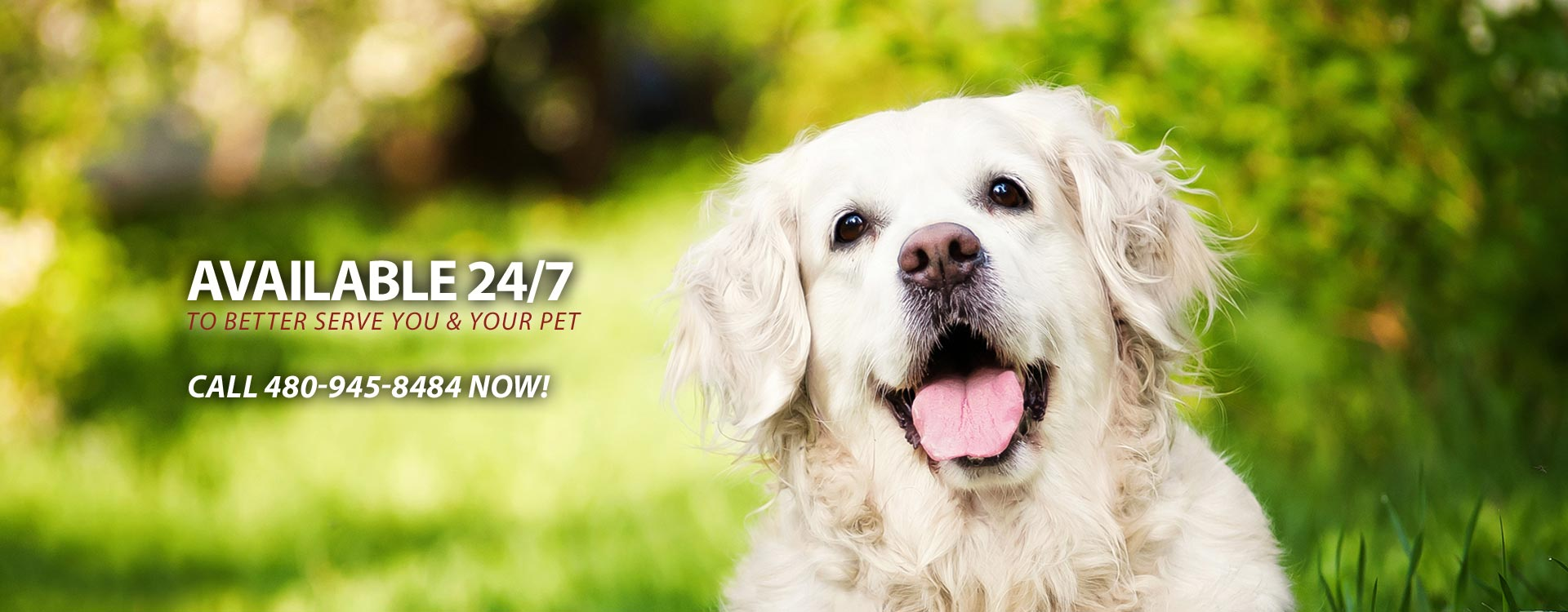 24 Hour Fountain Hills Veterinary Service